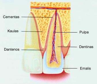 endodontinis-gydymas2
